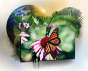 IMAGIC ECOACTIVES SCREEN